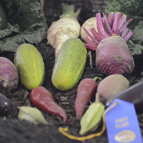First prize vegetables at a county fair