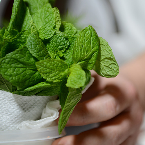 Chef with Mint and Herbs