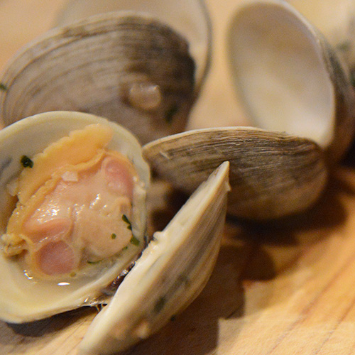 Clams as a source of B12